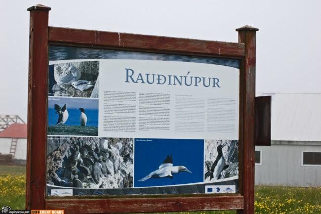 Przylądek Rauðinúpur i ptasi rezerwat